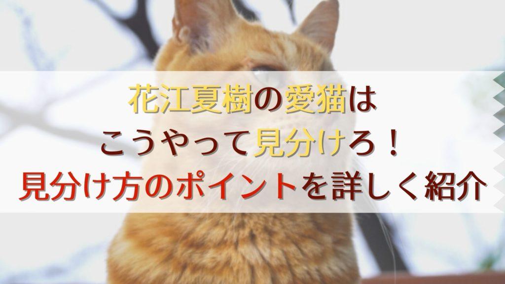 花江夏樹の愛猫の見分け方・ポイント種類性別
